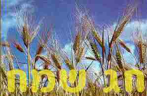 http://www.orianit.edu-negev.gov.il/ronit/sites/homepage/chetzronit/Images/shavuot4.jpg
